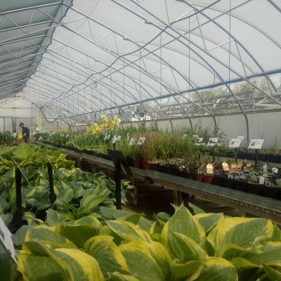 greenhouse 2 2021