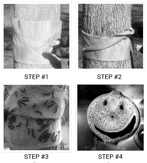 gypsy moth control