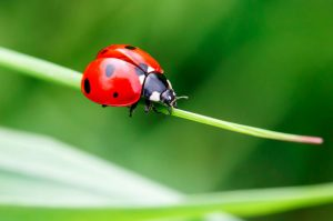 DIY Bio-Pesticides saves beneficial insects in your garden