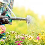 guidelines and tips for watering your gardentips